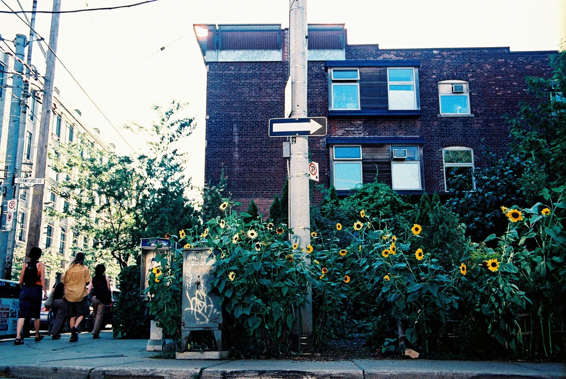 Sunflowers and phone booth outside 900 Queen Street West, early 2000s
