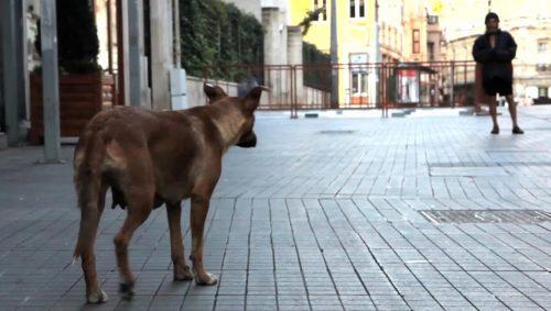 Film Screening: Taskafa, Stories Of The Street